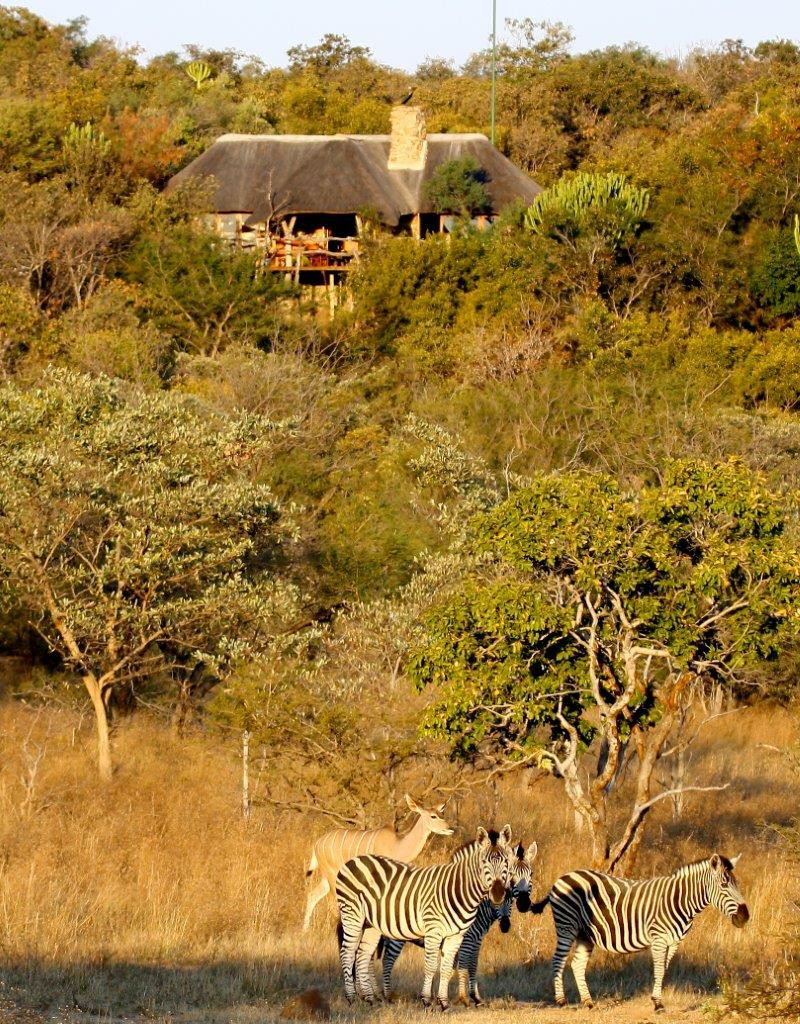 luxury game lodges south africa private bush home family holiday