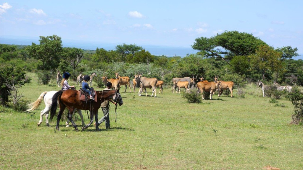 Family safari South Africa, Horseback riding safari, Guided walking ...