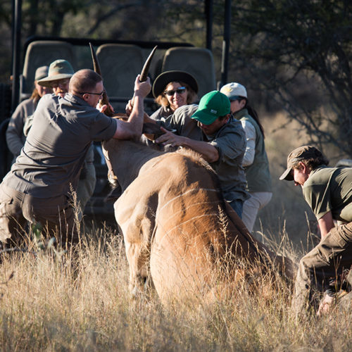 GC2017_Friday_Buffalo - Sable - Kudu - Eland-13