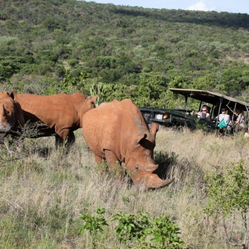 Game drives (2)