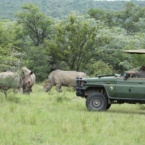 Game drives (3)