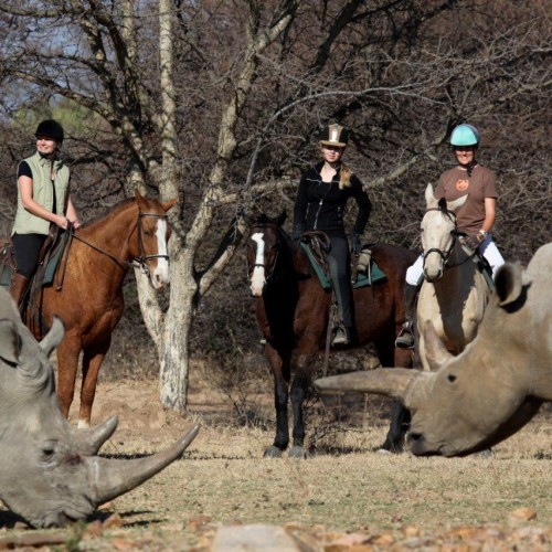 Horse riding (14)