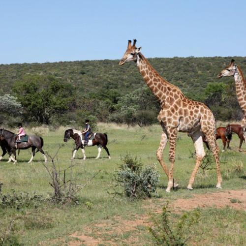 Riding safaris (29)