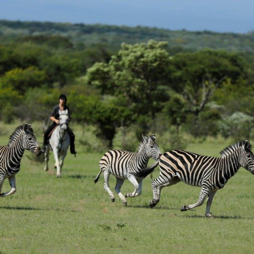 Riding safaris(1)