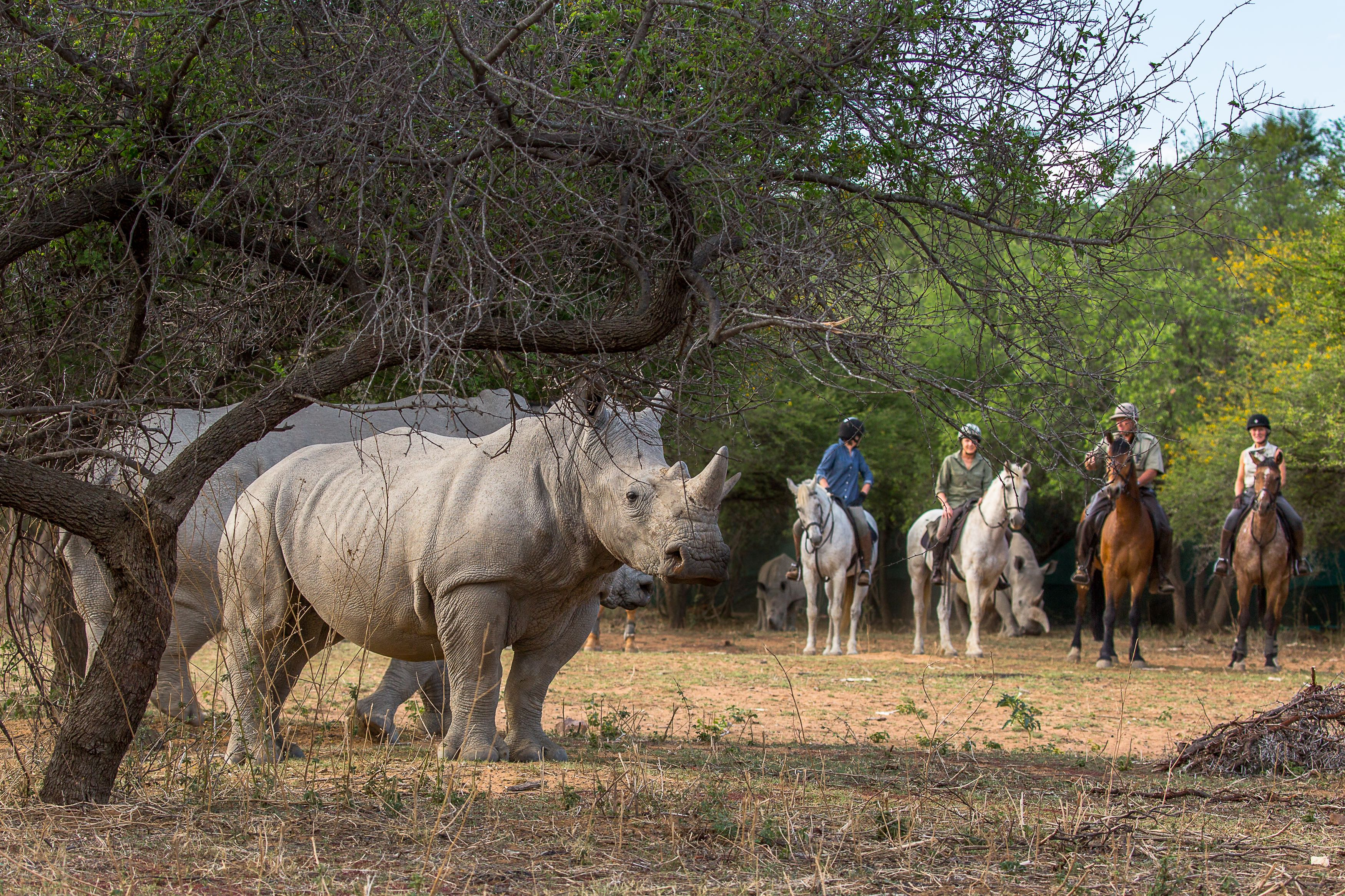 Chomping at the Bit for a Horseback Safari