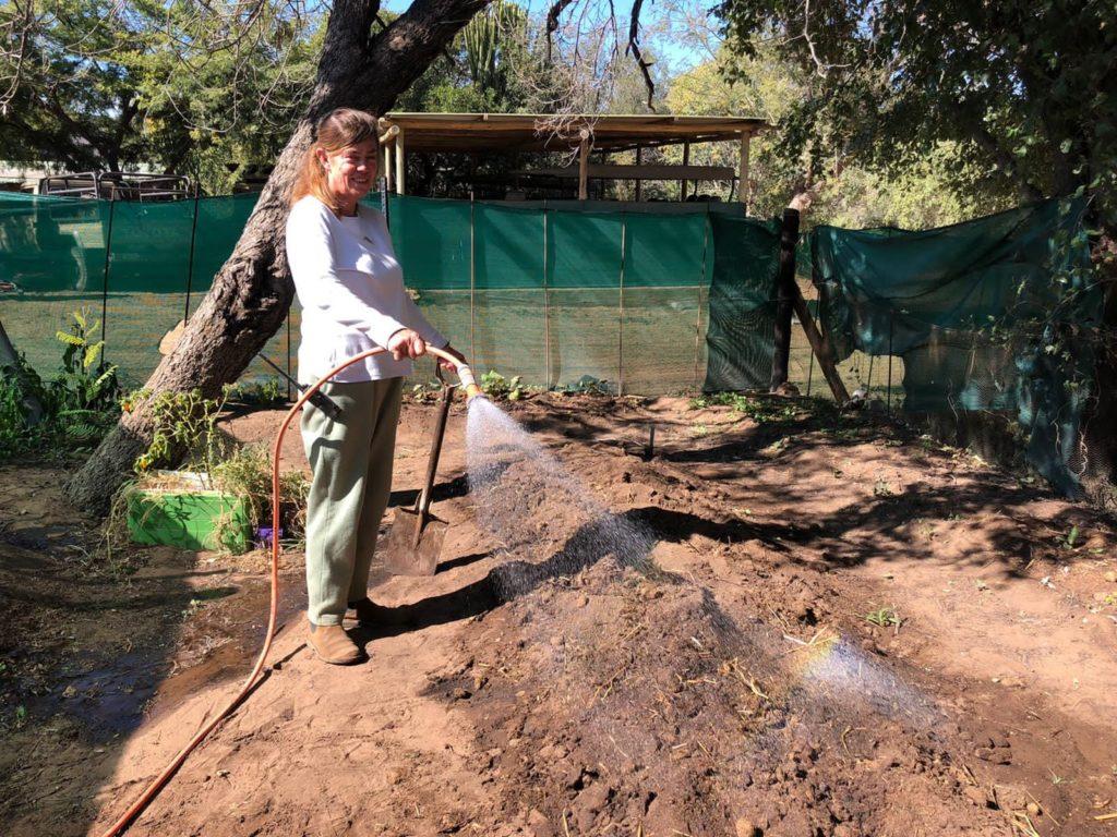 vegetable garden, Ant's Nest Bush Home