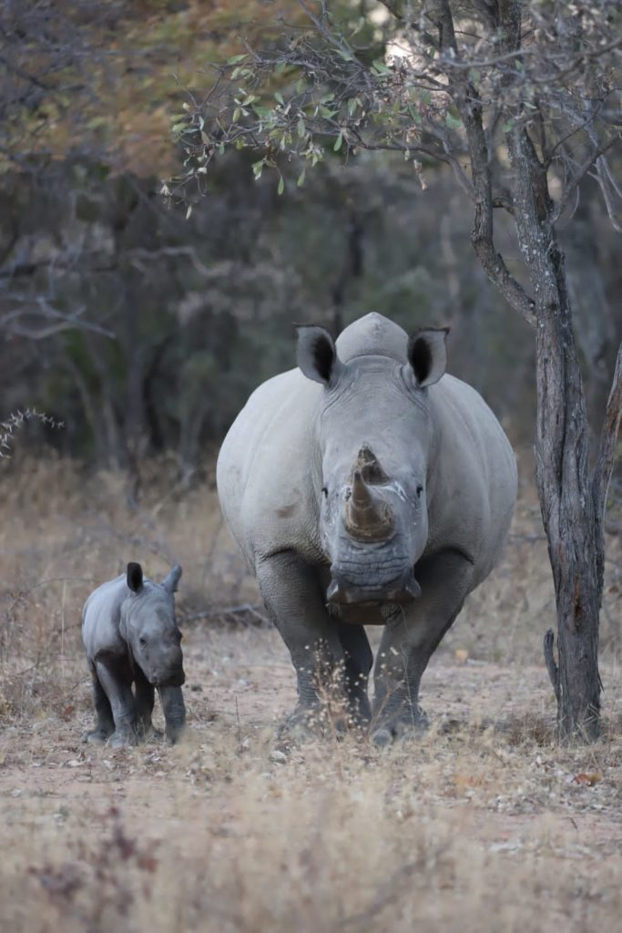 new rhino baby at Ant's Nest and Ant's Hill