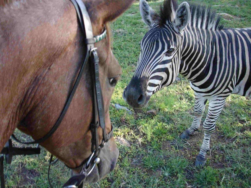 horseback safari in south africa