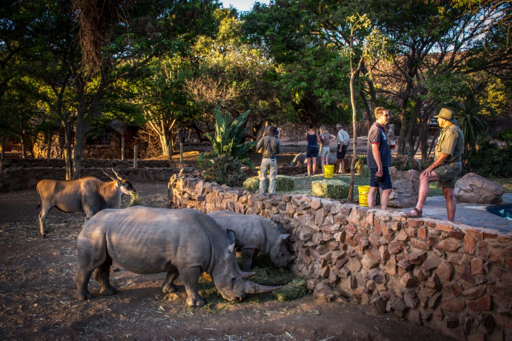 rhino conservation in waterberg
