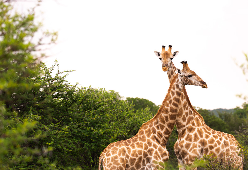 private game reserve south africa